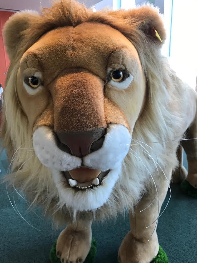 0511ブログ画像:ライオン